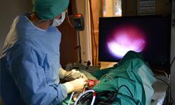Procedures / Operations